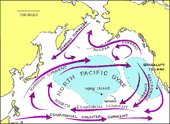 The North Pacific Gyre