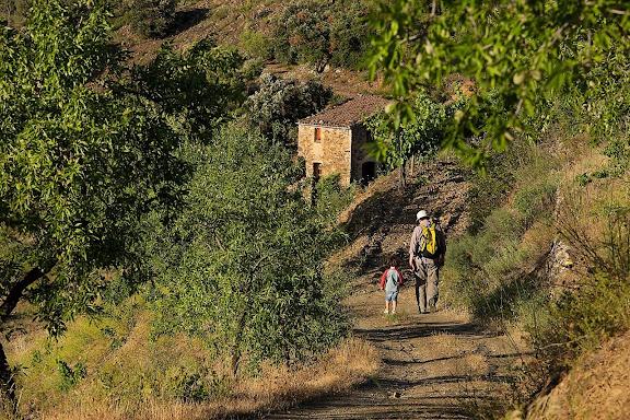 Camí de l'Ermita de la Consolació, DOQ Priorat, La Vilella Alta, Priorat, Tarragona