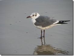 5562 Seagull at Waters Edge South Padre Island Texas
