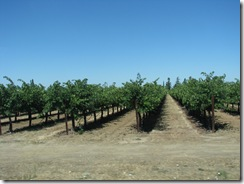 3046 Grape Vinyards between Galt & Woodbridge CA