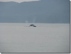 4493 Whale Watching Juneau AK