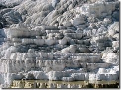 5822 Mammoth Hot Springs Terraces Yellowstone National Park