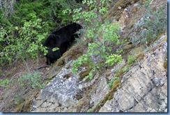 9443 Black Bear Going To The Sun Road GNP MT