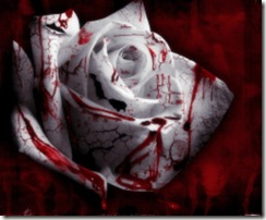 Blood_Roses_Wallpaper_1280x10242[2]