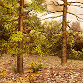Hidden Garden Woods
