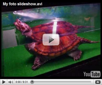 , Realizare slideshow cu:Ashampoo Slideshow Studio HD&Ashampoo Shrink and Burn, startachim blog