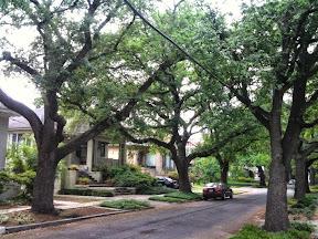 Oak Trees line a street in New Orleans.