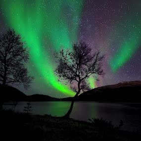 Northern lights over Vesterålen by Marius Birkeland - Uncategorized All Uncategorized (  )