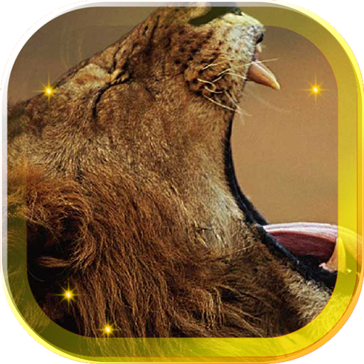 Lions African live wallpaper 個人化 App LOGO-硬是要APP