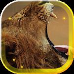 Lions African live wallpaper