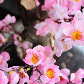 flower by Yoga Sanjaya - Flowers Single Flower