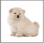 Chow Chow Pups 101
