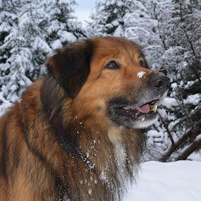 by Kjetil Salomonsen - Animals - Dogs Portraits