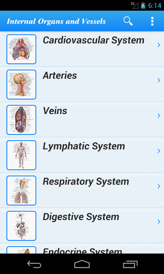 Human Anatomy II Lite - screenshot
