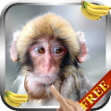 Monkey Live Wallpaper icon