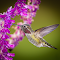 Hbird_10-18-14_TB5A1656-as-Smart-Object-1.jpg