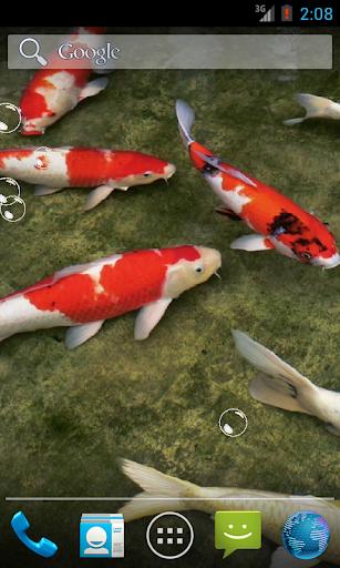Real Koi Fish HD