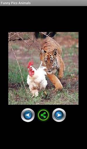 有趣的動物圖片