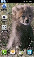Screenshot of Baby Upset Cheetah Wallpaper
