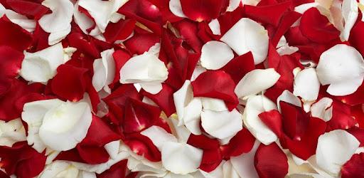 Rose Petals Live Wallpaper Apps On Google Play