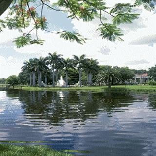 Palm island Live Wallpaper