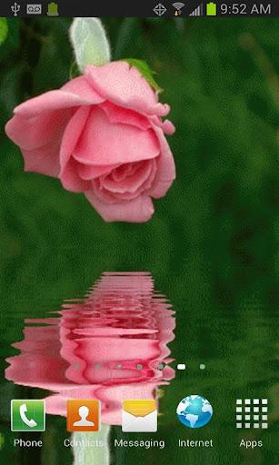 Pink Rose Reflection Free LWP