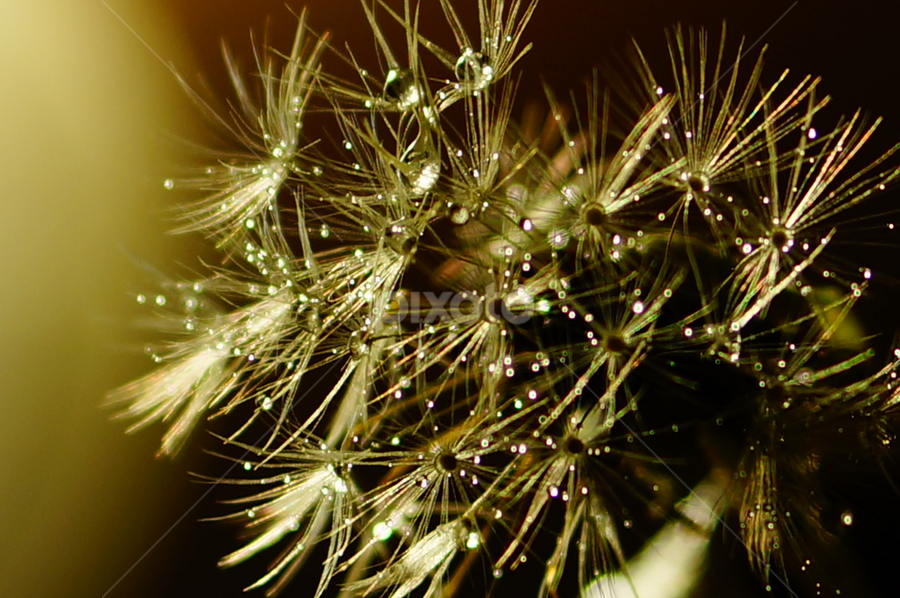 by Angelika Sauer - Nature Up Close Other plants