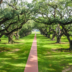 Oak Alley Plantation by Lee Davenport - Nature Up Close Trees & Bushes