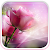 Pink Roses Live Wallpaper file APK for Gaming PC/PS3/PS4 Smart TV