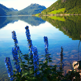 The Lakes of Norway by Scott Walker - Landscapes Waterscapes ( mountains, lakes, beauty, flowers, norway )