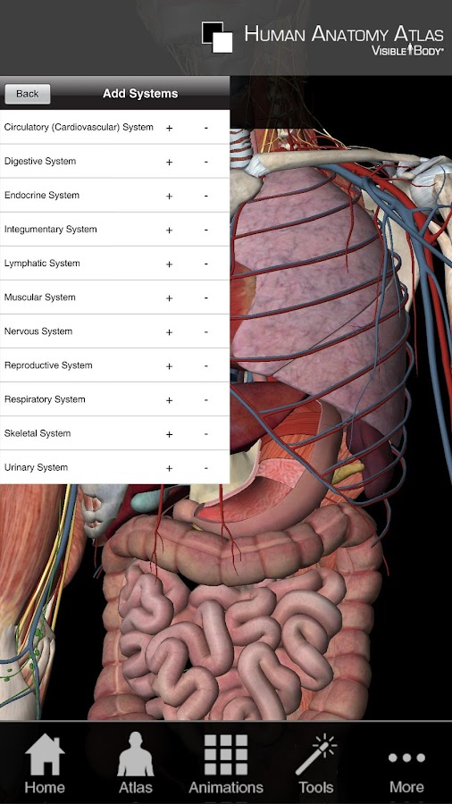 Human Anatomy Atlas SP - screenshot