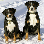 Puppies and Dogs 3 FREE