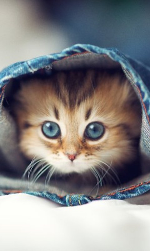 Кумедне кошеня Шпалери