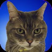 Kitty Widget