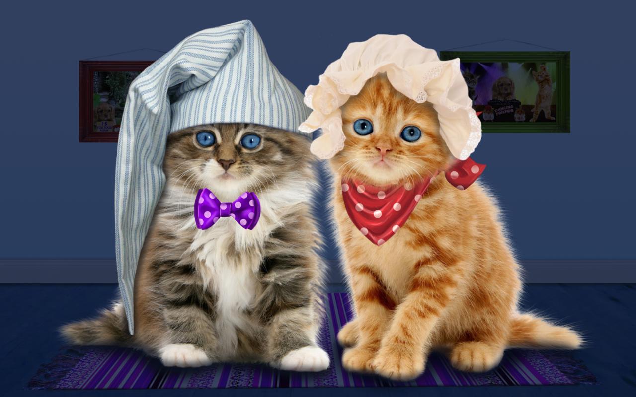 Berbicara Kucing Lucu Apl Android Di Google Play