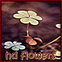 صور ورود طبيعية icon