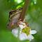 June 22 Frog Flower.jpg