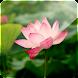 3D Lotus (Pro)