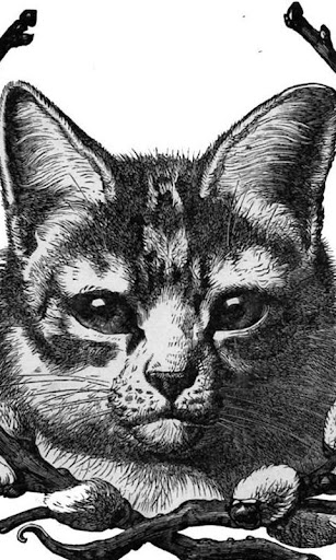 ヴィンテージ猫の壁紙