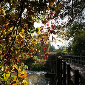 Bridge over water by Pavel Laberko - Landscapes Waterscapes ( pwc89, leaves, bridges, shade, sun, river, bridge )
