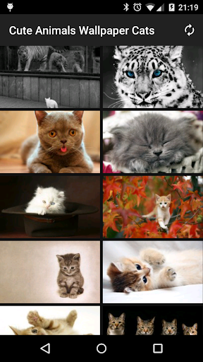 Cute Animals Wallpaper Cats