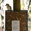 Kookabura
