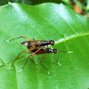 Flies?