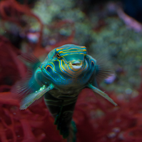 by Viks Pix - Animals Sea Creatures ( green, fish, playful, cute, creature, colorful, sea )