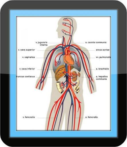 Chronic Disease Guide