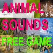 Animal Sounds Free Game Kids