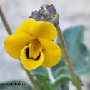Scorpion Viola