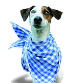 Hundeschule Gassmann Köln