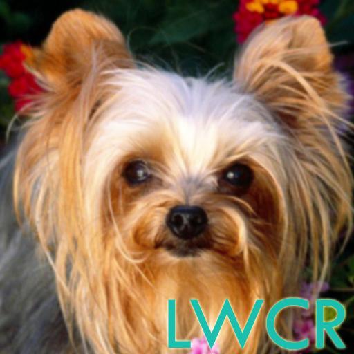 个人化のヨークシャーテリア犬LWP LOGO-記事Game