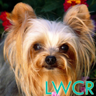 yorkshire terrier lwp icon